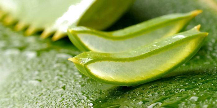 Foglie di Aloe Vera tagliate