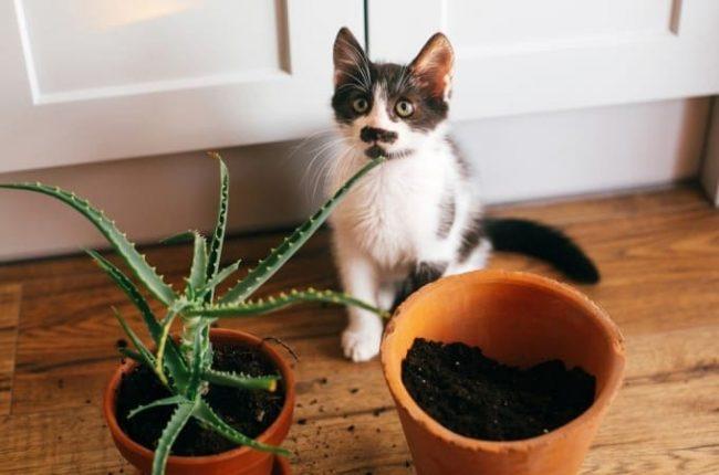 Aloe Vera ad uso veterinario